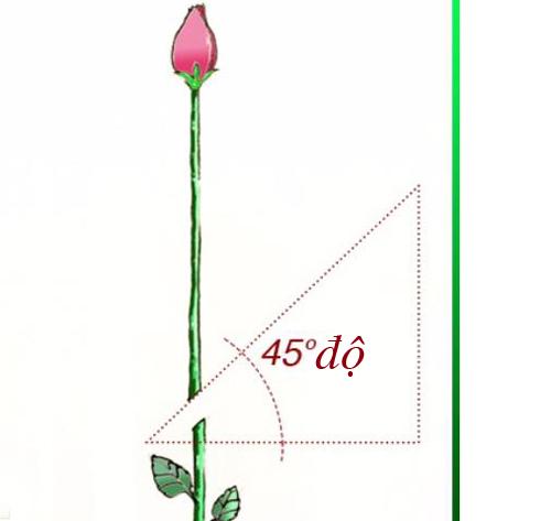 tuyet chieu trong hong bang khoai tay len hoa ruc ro - 1