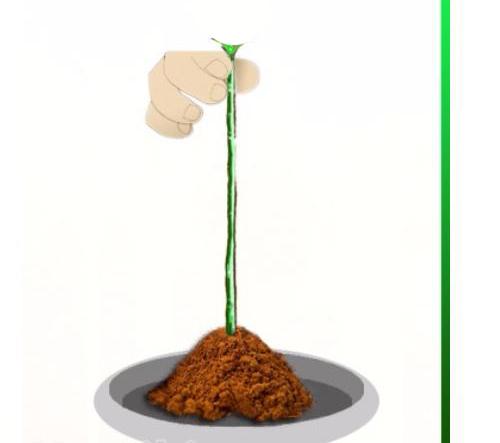 tuyet chieu trong hong bang khoai tay len hoa ruc ro - 6