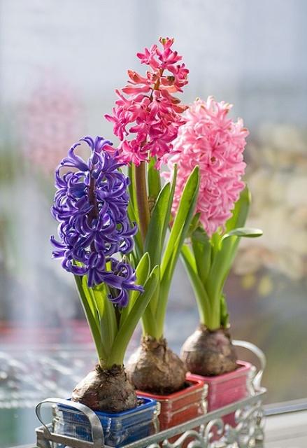 3 loại hoa phá vỡ phong thủy nên kiêng trong nhà - 2