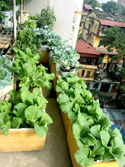 Chồng ngộ độc vì ăn rau sạch siêu thị 8x xinh đẹp hà nội quyết tâm tự trồng rau tại nhà - 10