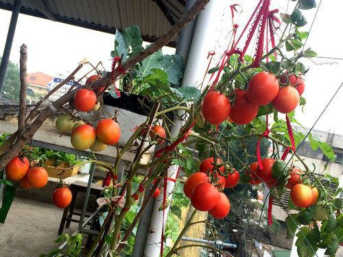 Chồng ngộ độc vì ăn rau sạch siêu thị 8x xinh đẹp hà nội quyết tâm tự trồng rau tại nhà - 2