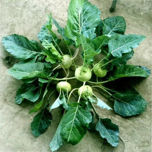 Chồng ngộ độc vì ăn rau sạch siêu thị 8x xinh đẹp hà nội quyết tâm tự trồng rau tại nhà - 14