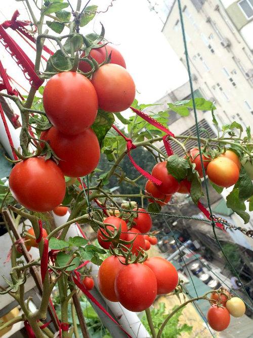 Chồng ngộ độc vì ăn rau sạch siêu thị 8x xinh đẹp hà nội quyết tâm tự trồng rau tại nhà - 3