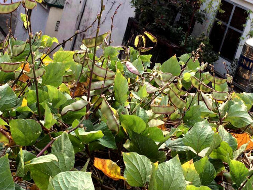 Chồng ngộ độc vì ăn rau sạch siêu thị 8x xinh đẹp hà nội quyết tâm tự trồng rau tại nhà - 16