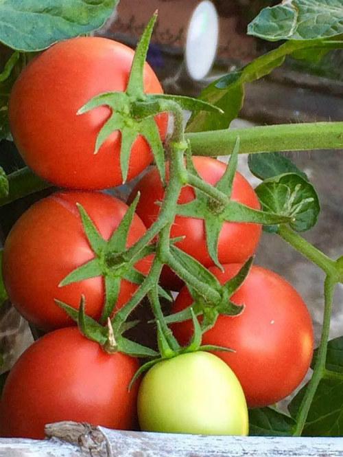 Chồng ngộ độc vì ăn rau sạch siêu thị 8x xinh đẹp hà nội quyết tâm tự trồng rau tại nhà - 5