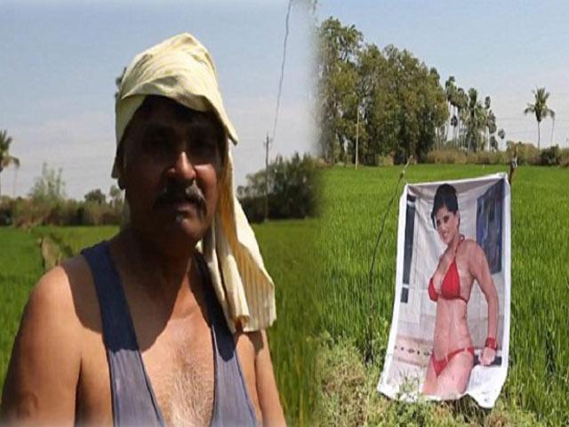 Treo ảnh mát mẻ để bảo vệ vườn rau, bác nông dân bất ngờ khi biết nhân vật trong ảnh
