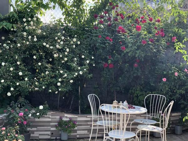 Xiêu lòng trước sân thượng rực rỡ hoa hồng của bà mẹ ở Hà Nội - 10