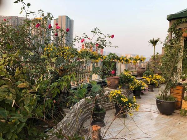 Xiêu lòng trước sân thượng rực rỡ hoa hồng của bà mẹ ở Hà Nội - 13