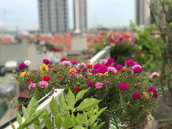 Xiêu lòng trước sân thượng rực rỡ hoa hồng của bà mẹ ở Hà Nội - 14
