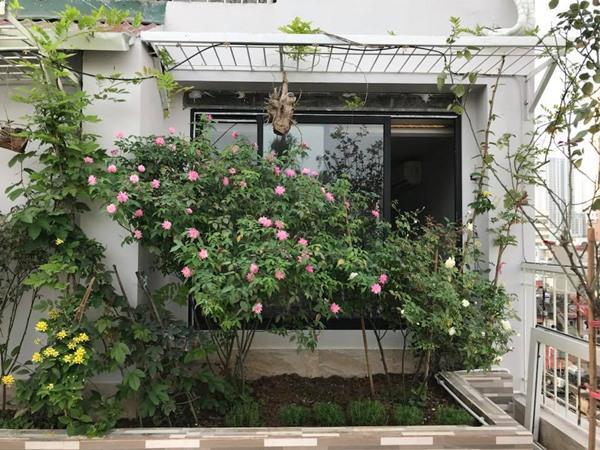 Xiêu lòng trước sân thượng rực rỡ hoa hồng của bà mẹ ở Hà Nội - 3