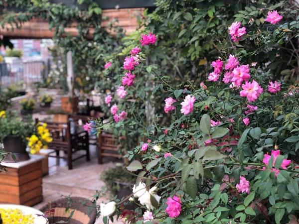 Xiêu lòng trước sân thượng rực rỡ hoa hồng của bà mẹ ở Hà Nội - 4