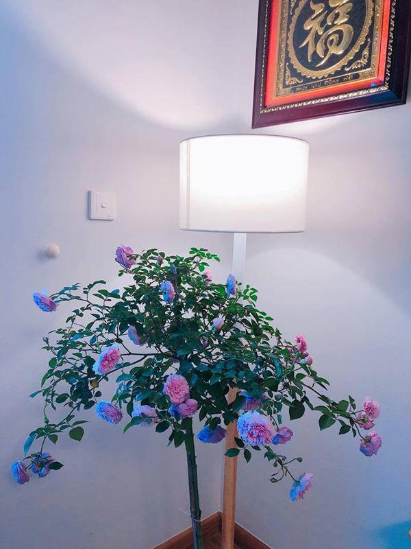 Mẹ Hà Nội chỉ cách cắm hoa tươi suốt 9 ngày nghỉ Tết, bông nào bông nấy đẹp amp;#39;bung lụaamp;#39; - 10