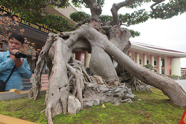 Sanh cổ amp;#34;ngọa hổ tàng longamp;#34; giá hơn 32 tỷ đồng của đại gia Phú Thọ - 11