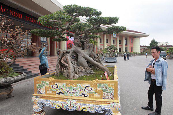 Sanh cổ amp;#34;ngọa hổ tàng longamp;#34; giá hơn 32 tỷ đồng của đại gia Phú Thọ - 2