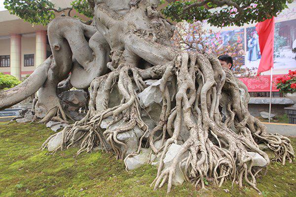 Sanh cổ amp;#34;ngọa hổ tàng longamp;#34; giá hơn 32 tỷ đồng của đại gia Phú Thọ - 8