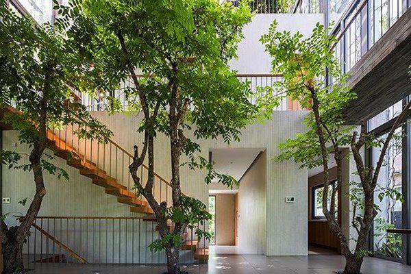 ho bien ca rung cay xanh vao trong nha pho 5 1551685521 421 width600height400 Hô biến cả rừng cây xanh vào trong nhà phố