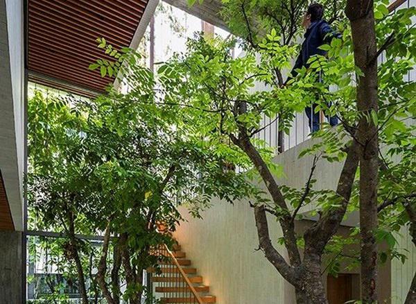 ho bien ca rung cay xanh vao trong nha pho 6 1551685521 611 width600height438 Hô biến cả rừng cây xanh vào trong nhà phố