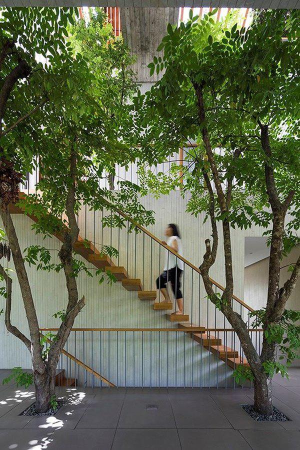 ho bien ca rung cay xanh vao trong nha pho 7 1551685521 850 width600height900 Hô biến cả rừng cây xanh vào trong nhà phố