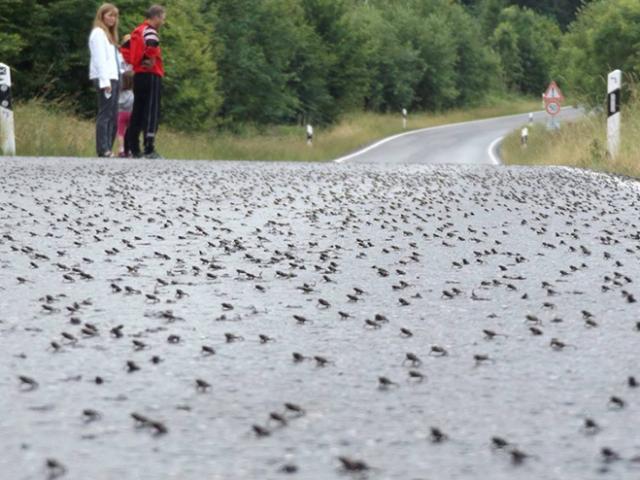 Mưa cá, mưa máu, mưa bò và những cơn mưa kỳ lạ nhất trên thế giới
