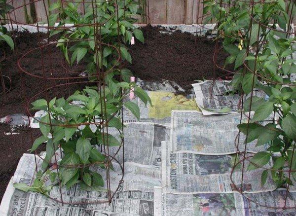 Giấy vụn không dùng đừng bỏ thùng rác, mang vứt ra vườn sẽ thấy điều kì diệu - 4