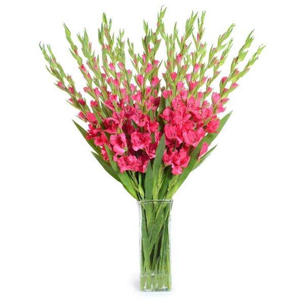 Cách cắm hoa lay ơn để bàn thờ đẹp và tươi lâu ngày Tết - 9