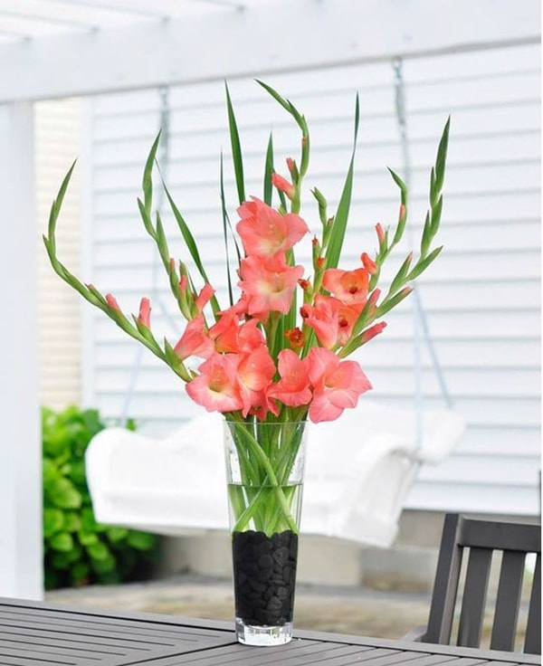 Cách cắm hoa lay ơn để bàn thờ đẹp và tươi lâu ngày Tết - 10