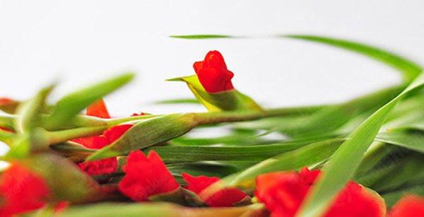 Cách cắm hoa lay ơn để bàn thờ đẹp và tươi lâu ngày Tết - 3