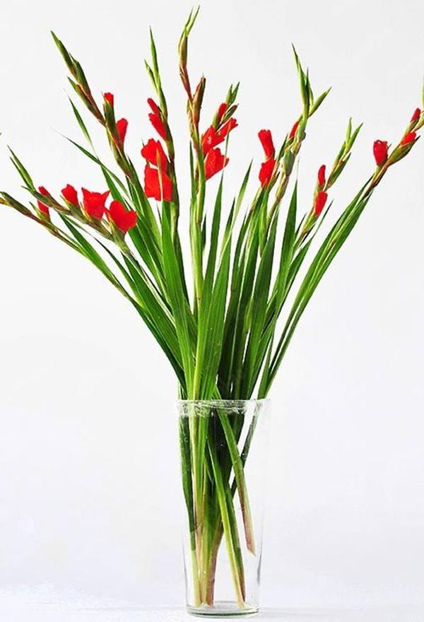 Cách cắm hoa lay ơn để bàn thờ đẹp và tươi lâu ngày Tết - 4