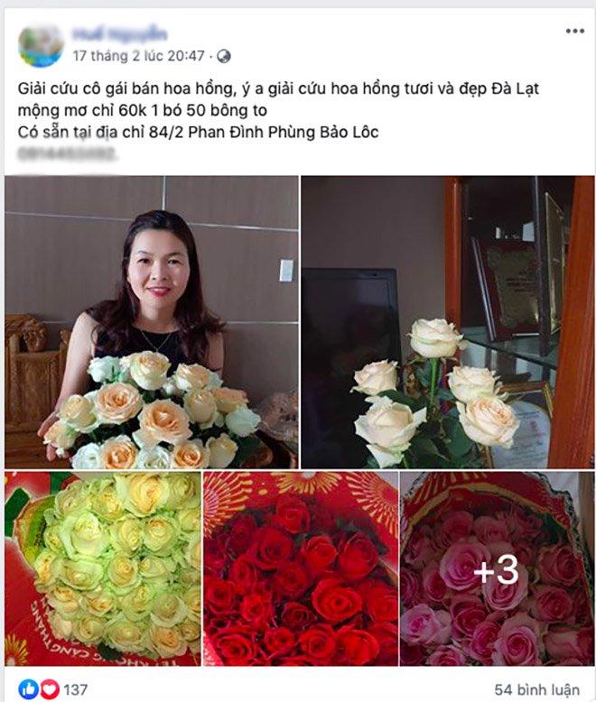 Chị em đua nhau giải cứu trăm nghìn bông hoa hồng Đà Lạt, giá chỉ từ 700 đồng/bông