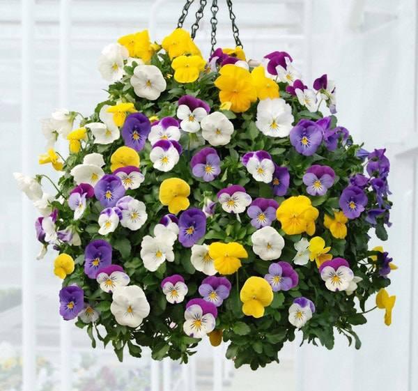 10 loai hoa trong ban cong ho bien ngoi nha them ruc ro, nha nao cung nen co - 7