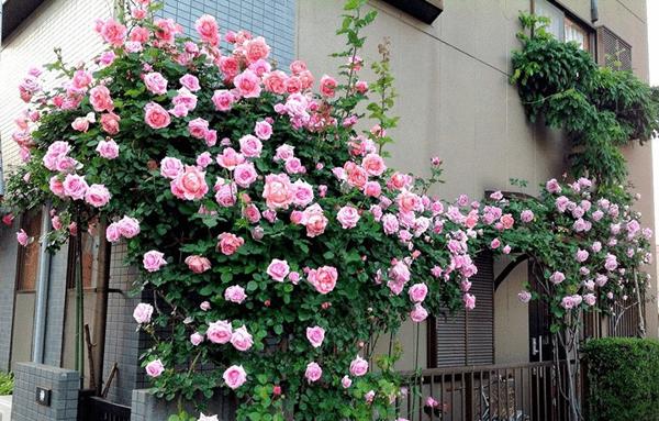 10 loai hoa trong ban cong ho bien ngoi nha them ruc ro, nha nao cung nen co - 3
