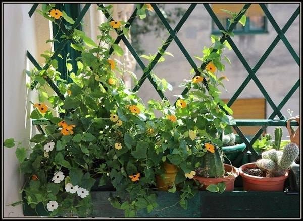 10 loai hoa trong ban cong ho bien ngoi nha them ruc ro, nha nao cung nen co - 8