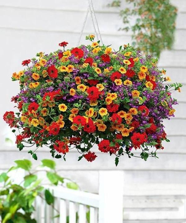 10 loai hoa trong ban cong ho bien ngoi nha them ruc ro, nha nao cung nen co - 9