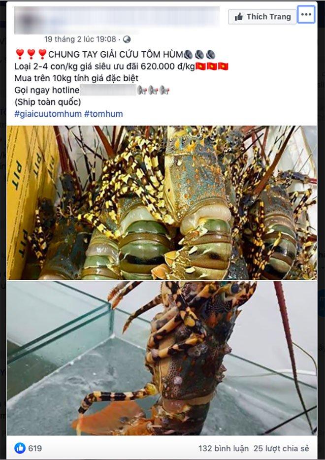 """nhiet tinh """"giai cuu tom hum rot gia"""": can phan biet cac loai tom hum keo mua """"ho"""" - 3"""