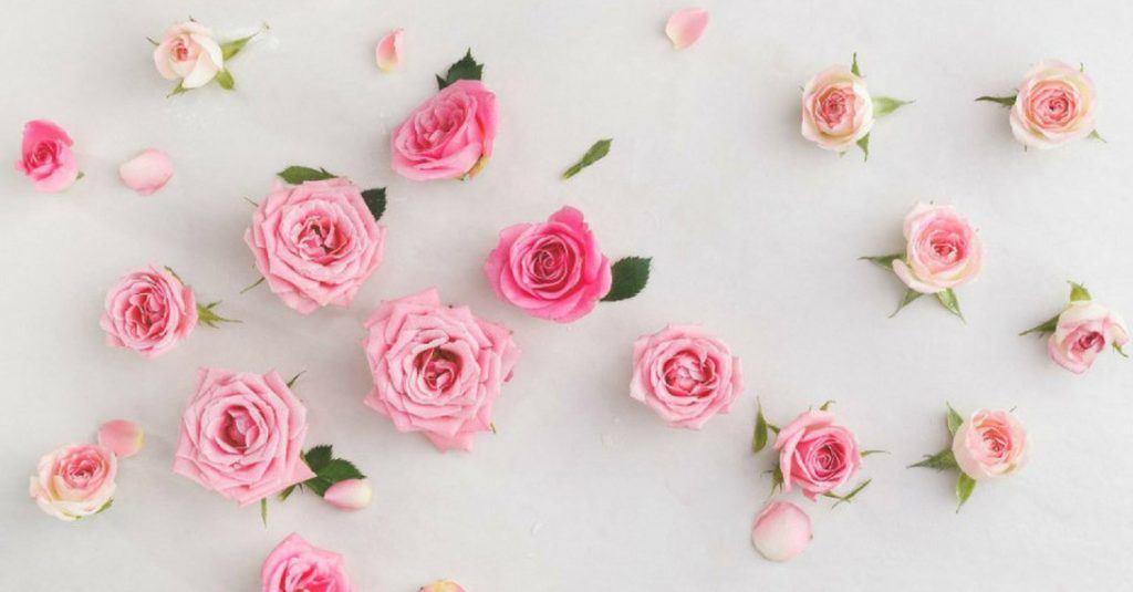 Lãng mạn không lãng phí: công thức chăm sóc da với hoa hồng ngày 8/3
