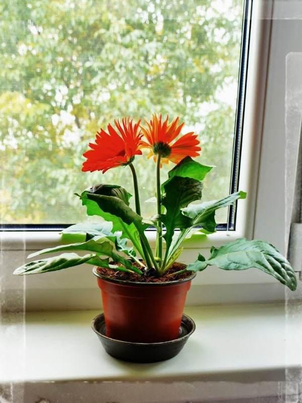 Các loại hoa đẹp dễ trồng tại nhà Hình 3