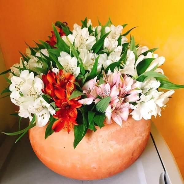 Các loại hoa đẹp dễ trồng tại nhà Hình 2