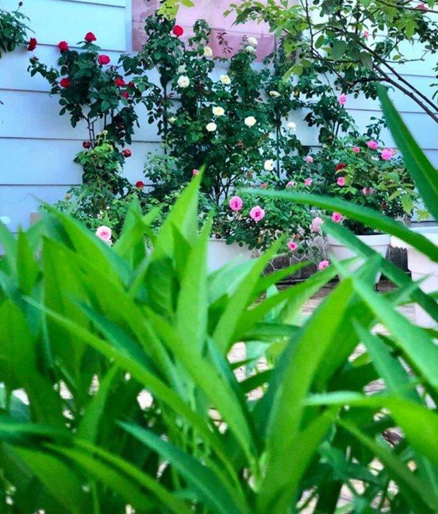 o nha tranh dich, quyen linh cung vo con len san thuong go khoai lang, thu hoach hoa trai - 12