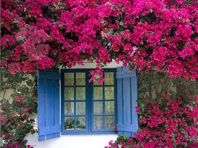 Những điều nhất định phải biết khi trồng cây ở ban công để đẹp vừa hút tài lộc