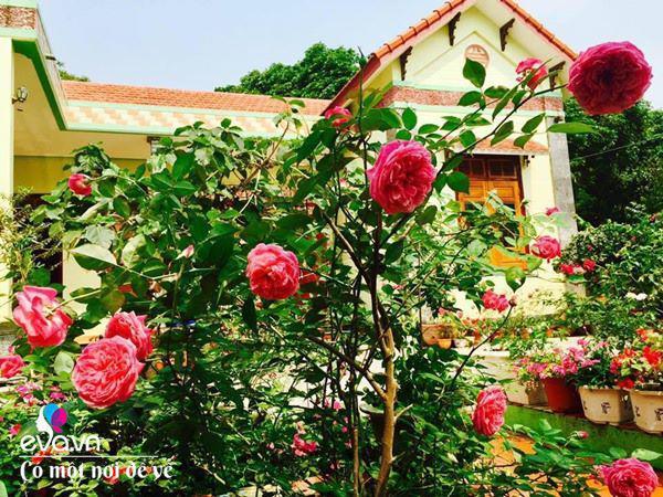 Cô giáo xứ Thanh cải tạo vườn trống, 4 năm sau có ngôi nhà hoa hồng đẹp như mơ - Ảnh 6.
