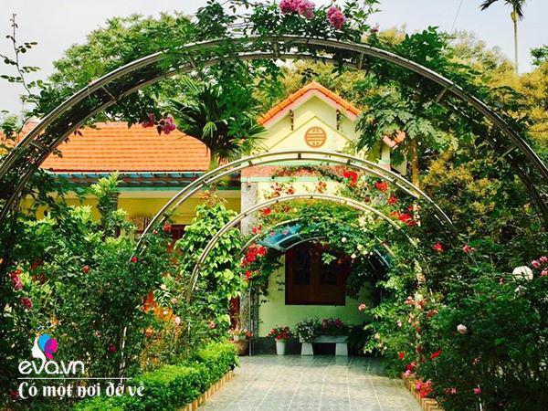 Cô giáo xứ Thanh cải tạo vườn trống, 4 năm sau có ngôi nhà hoa hồng đẹp như mơ - Ảnh 14.