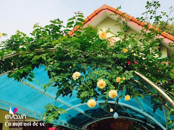 Cô giáo xứ Thanh cải tạo vườn trống, 4 năm sau có ngôi nhà hoa hồng đẹp như mơ - Ảnh 5.