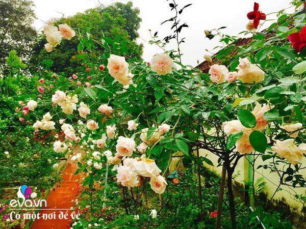 Cô giáo xứ Thanh cải tạo vườn trống, 4 năm sau có ngôi nhà hoa hồng đẹp như mơ - Ảnh 3.