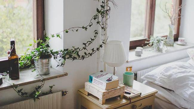 Lựa chọn cây phong thủy bài trí trong nhà, xua tà khí, mang lại may mắn cho gia chủ - 4