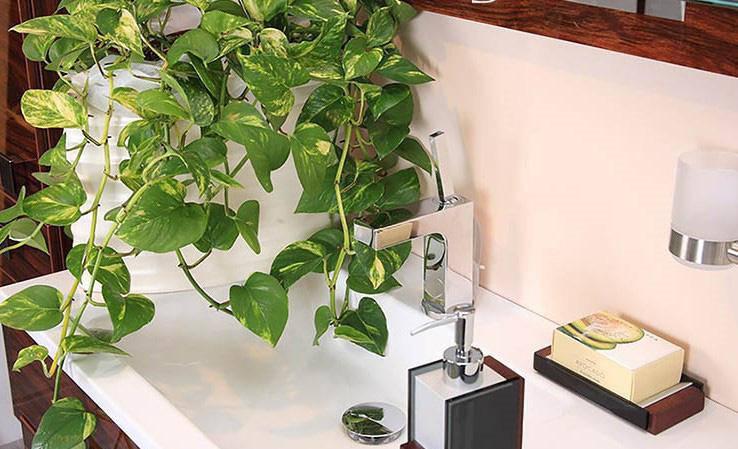 Lựa chọn cây phong thủy bài trí trong nhà, xua tà khí, mang lại may mắn cho gia chủ - 7