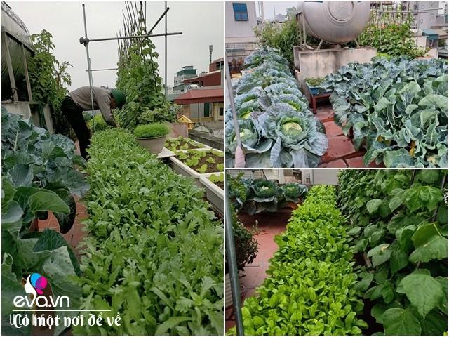 Ông bố HN đi xin đất không tốn một đồng, làm vườn 35m² xanh ngồn ngộn chưa tới chục triệu