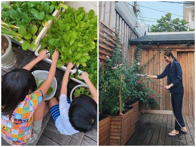 Tăng Thanh Hà trồng rau xanh trong biệt thự, 2 nhóc tỳ hào hứng phụ mẹ thu hoạch
