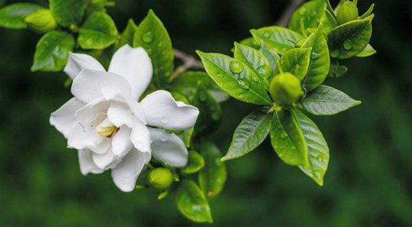 Mùa xuân nên chọn 5 loại hoa trên ban công, tươi lâu, đơn giản, trang nhã và đẹp - 4