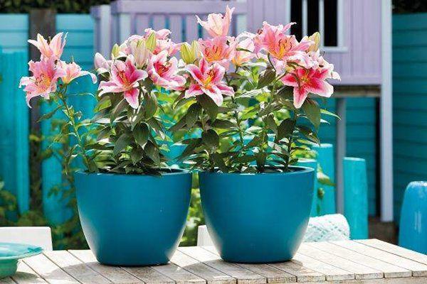 Mùa xuân nên chọn 5 loại hoa trên ban công, tươi lâu, đơn giản, trang nhã và đẹp - 5