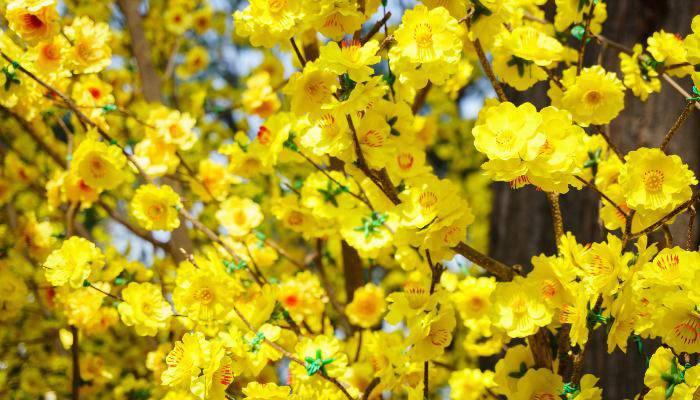 7 loại hoa phong thủy mang tài lộc, phúc khí trong năm Tân Sửu 2021 - 1